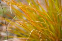 141. Mt Tapuae-o-uenuku Gossamer Grass