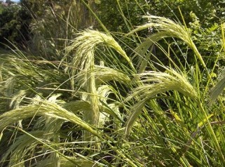 138. Mt Te Aroha Forest Grass
