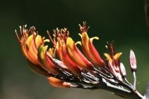 2. Native Flax